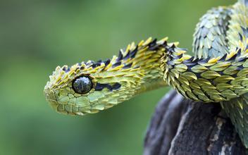 梦见很多蛇|谁梦见过蛇