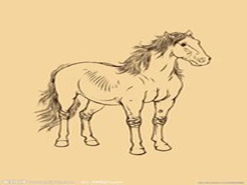 [生肖属马的年份]哪种生肖和属马的是最佳拍档