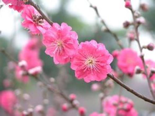 不同寻常的生肖|不同生肖有着不同的桃花风水