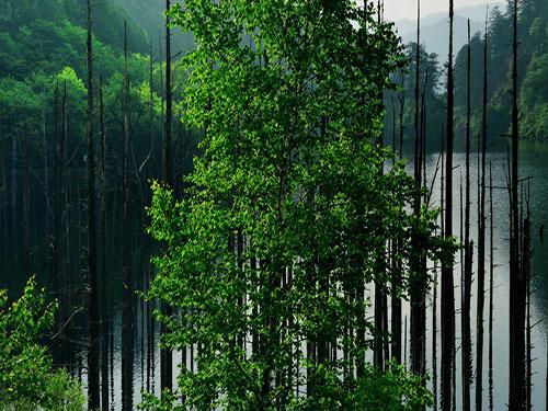 五行属木的姓名学解释_姓名学中属木的字及其意义
