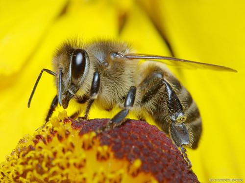 【周公解梦梦见被蜜蜂蛰】周公解梦-梦见好多蜜蜂
