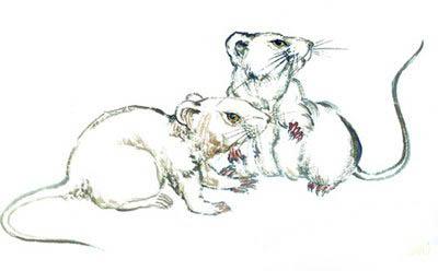 屬鼠人如何取一個有寓意的名字-好名字網