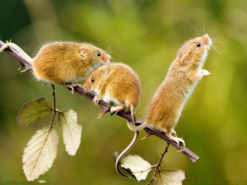 不同星座的属鼠人士2015_不同星座的属鼠人士2015年事业发展如何