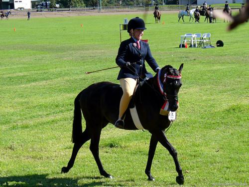 梦见骑马是什么兆头_梦境,梦见骑马