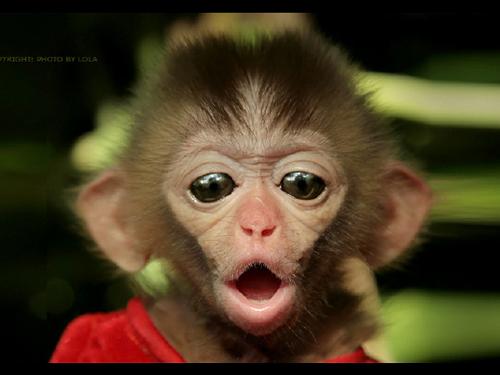 【猴年女宝宝取名宜用字】十二生肖取名之猴宝宝取名大全