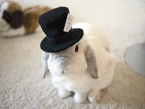十二生肖取名用字宜忌_十二生肖取名之兔宝宝取名大全