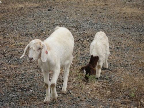 生肖羊属羊人2015年运势_生肖羊:属羊人2015年最新运程