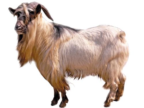 生肖羊属羊人2016年流月运势_生肖羊:属羊人2016年流月运势