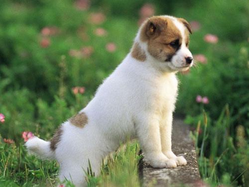 生肖狗狮子座的属狗人是什么性格特点_生肖狗:狮子座的属狗人是什么性格?