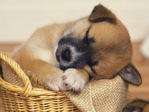 【生肖狗天秤座的属狗人是什么性格特点】生肖狗:天秤座的属狗人是什么性格?