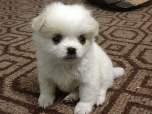 【生肖狗双子座的属狗人是什么性格特点】生肖狗:双子座的属狗人是什么性格?
