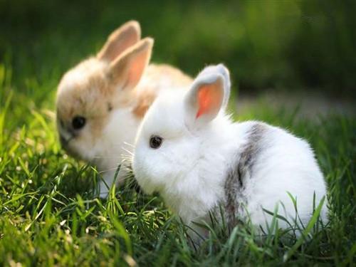 【2015年11月属兔的运势如何】2015年11月,属兔的运势大全