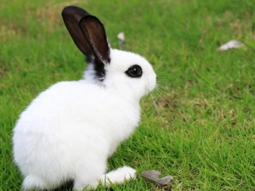 【属兔的和什么属相能成为朋友】属相兔的朋友与敌人