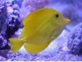什么样的观赏鱼有益于家居风水