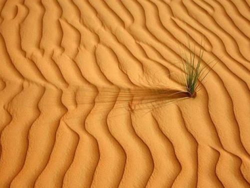 【梦见一群动物怎么回事】梦见一堆沙子怎么回事